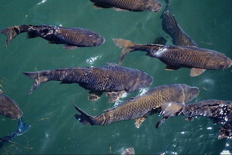 леневский пруд отчеты о рыбалке